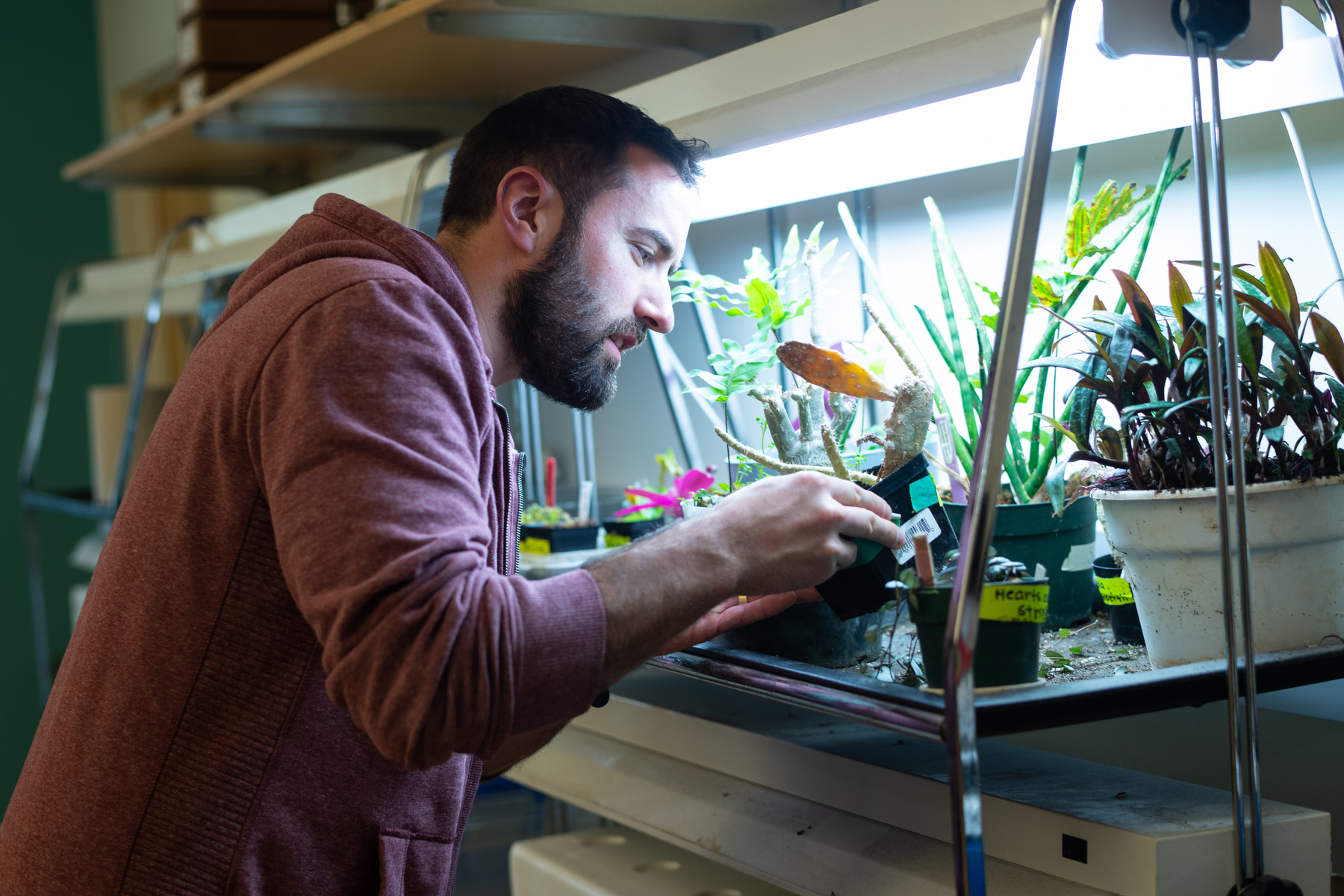 A biology student examines plants on a lab shelf