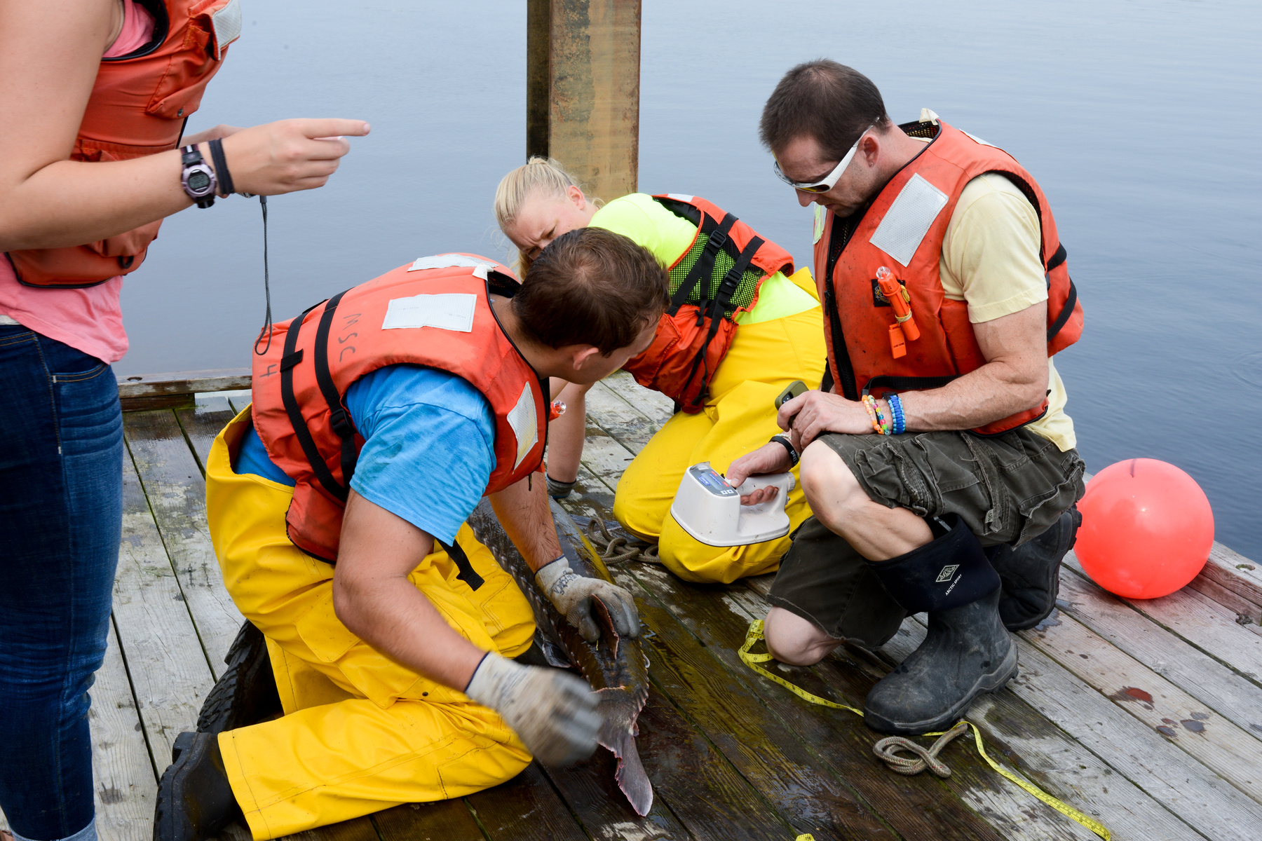 Sturgeon research with Dr. Sulikowski