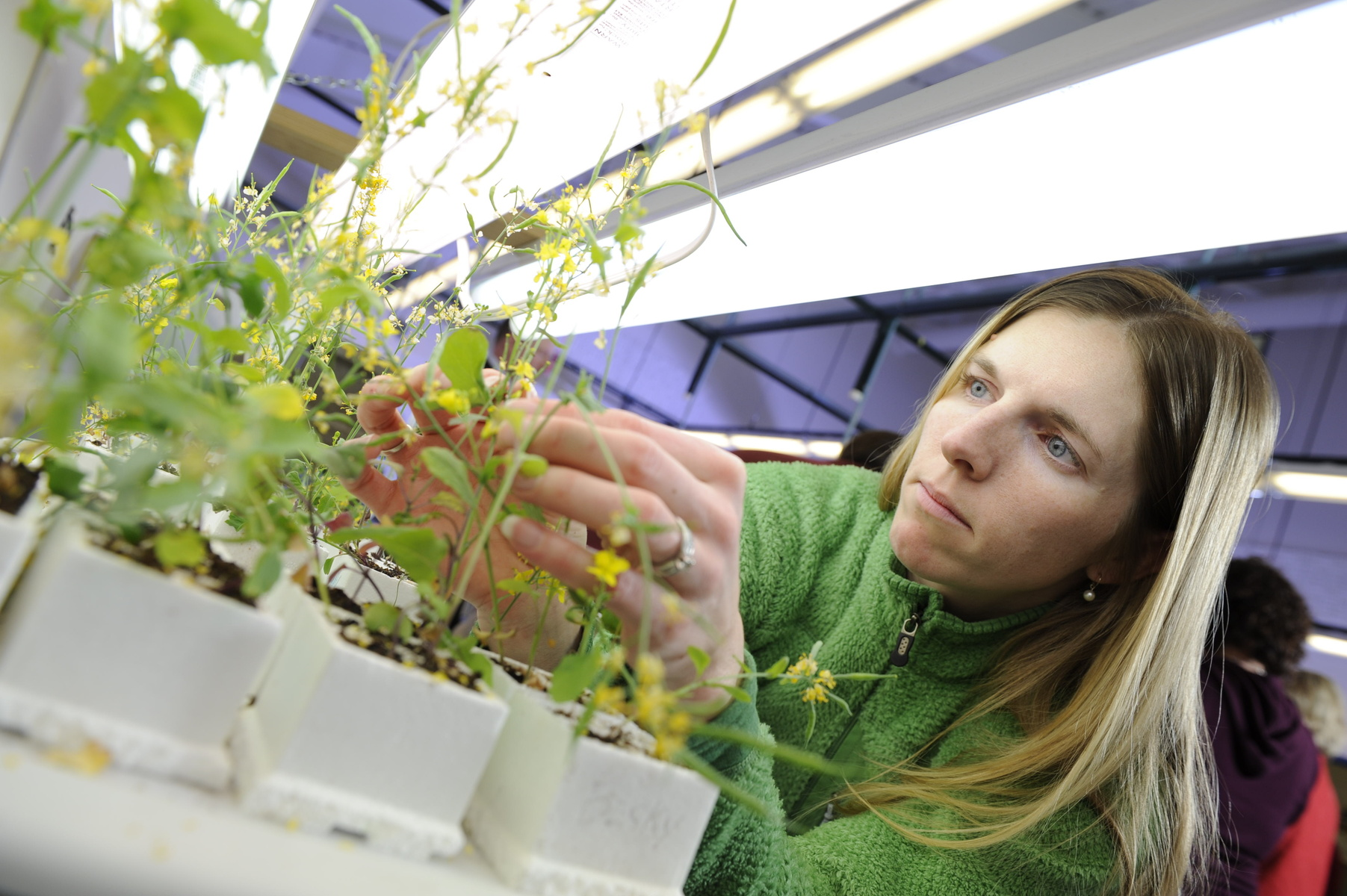 A female student tends to plants in a greenhouse