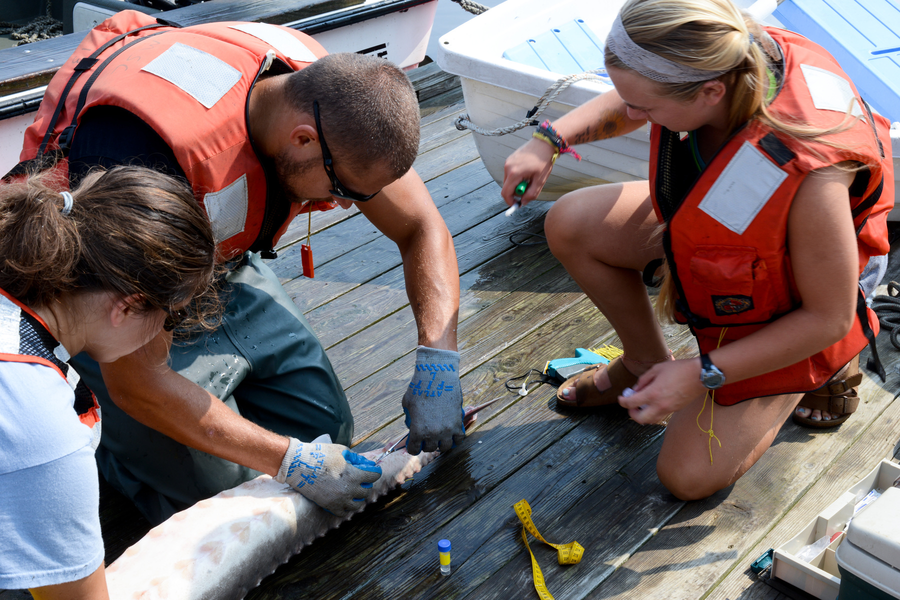 Three student researchers examine a large fish they hold against a dock