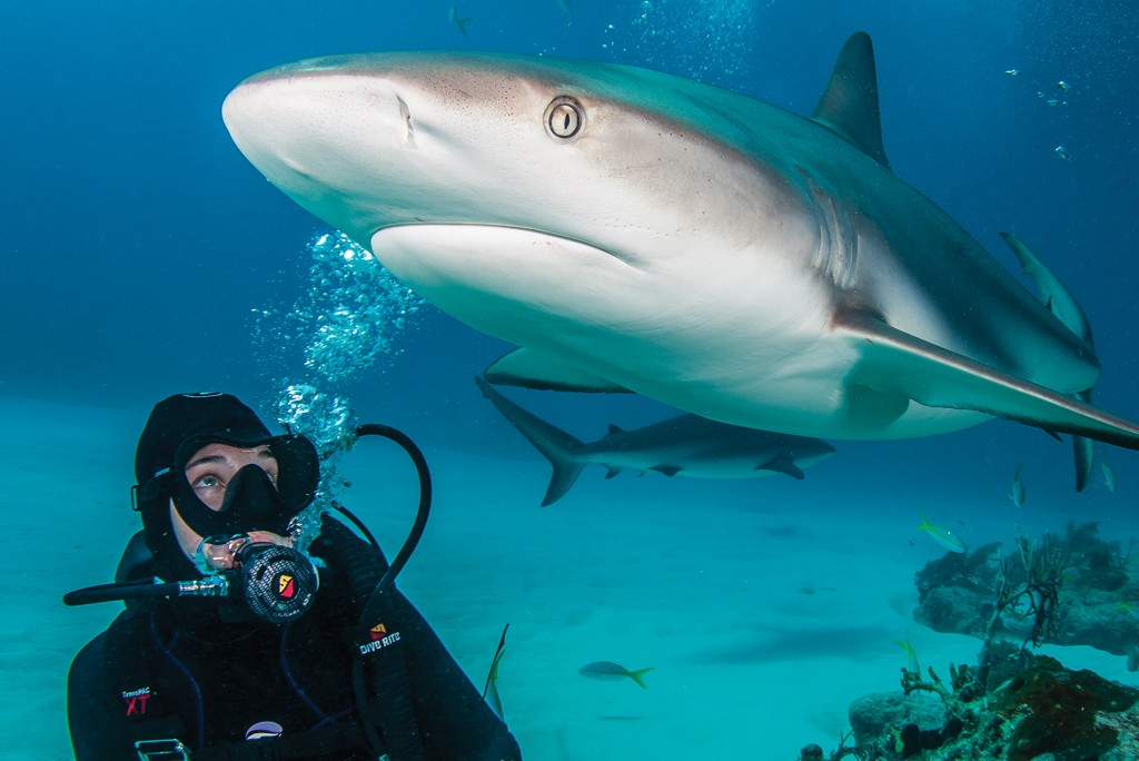 scuba diver with shark