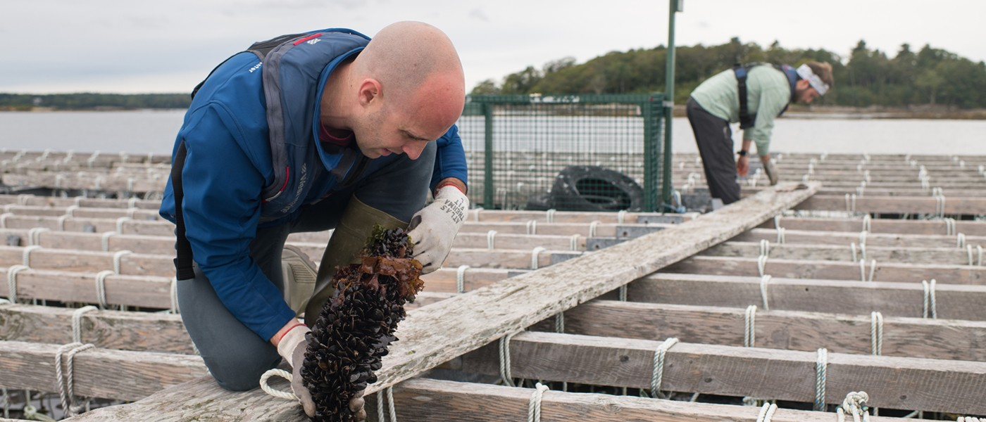 A student and employee work at a seaweed aquaculture facility