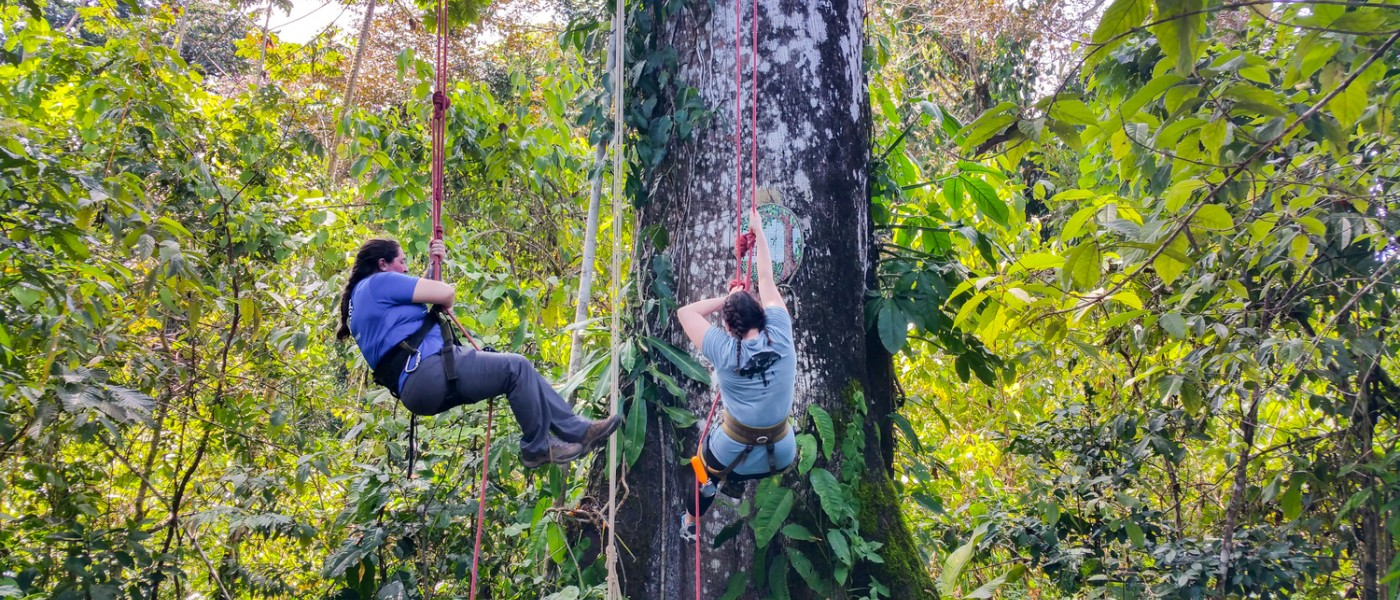 Tree Climibing in the Rainforest Panama