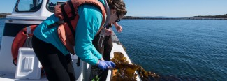 students on boat studying kelp