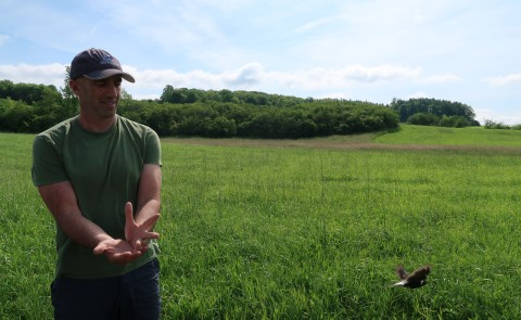 Noah Perlut releases an adult bobolink after banding it